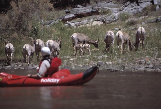 What's a typical day like on the river? A Day of River Life