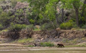 Black Bear Desolation Canyon