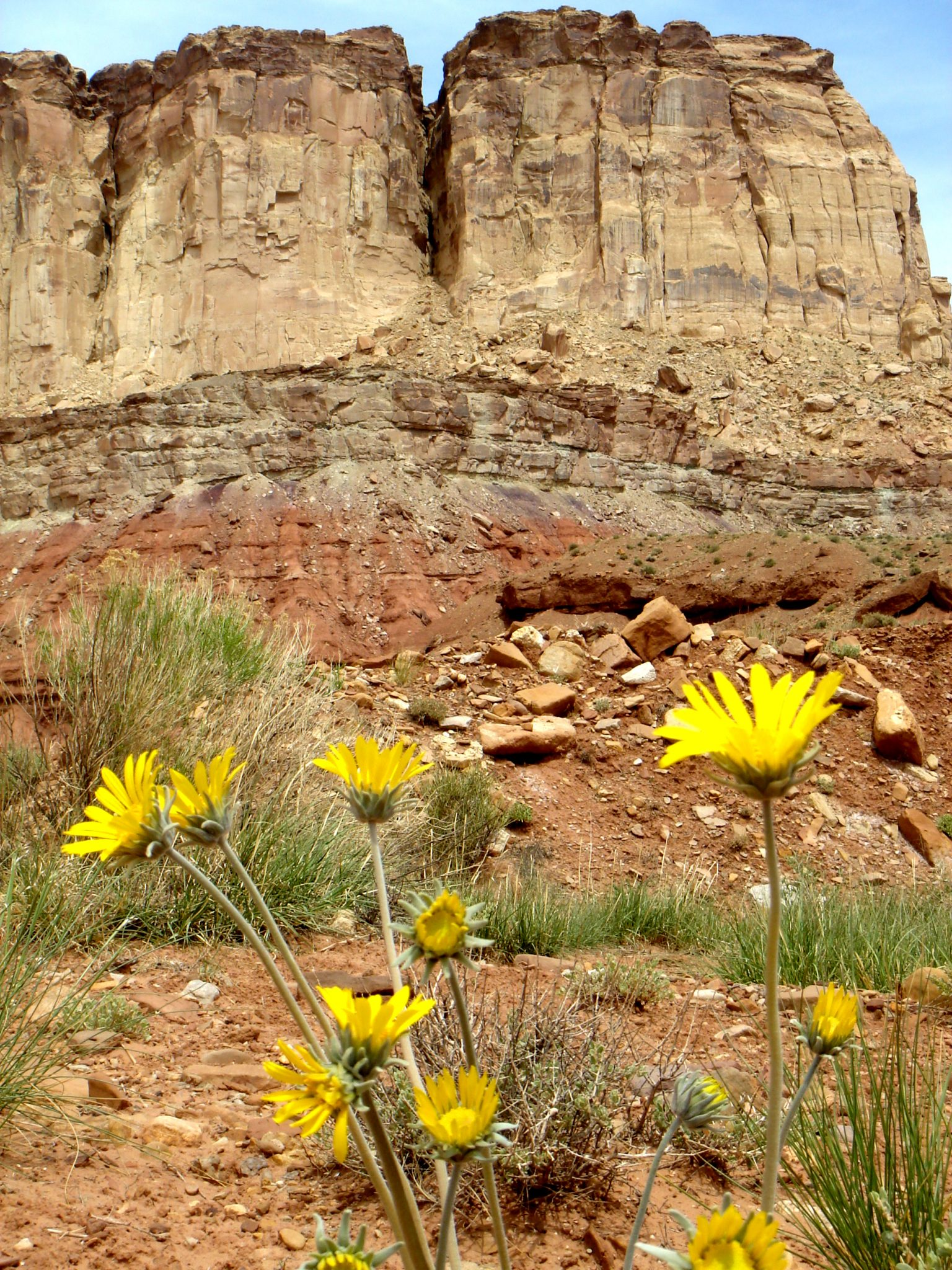 Arizona wildflowers nude-6082