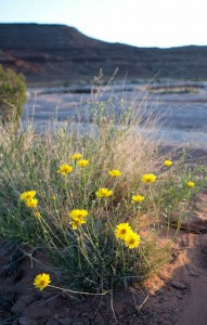 Spring-wildflowers-on-Rafting-trips