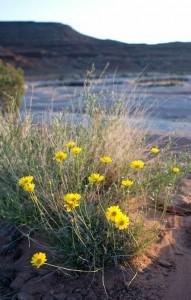 Spring-wildflowers-on-Rafting-trips