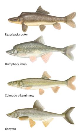 endangered-fish-sm