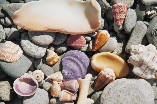 Shells in Baja