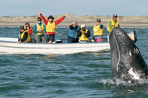 Baja Mexico Whale Slideshow 3
