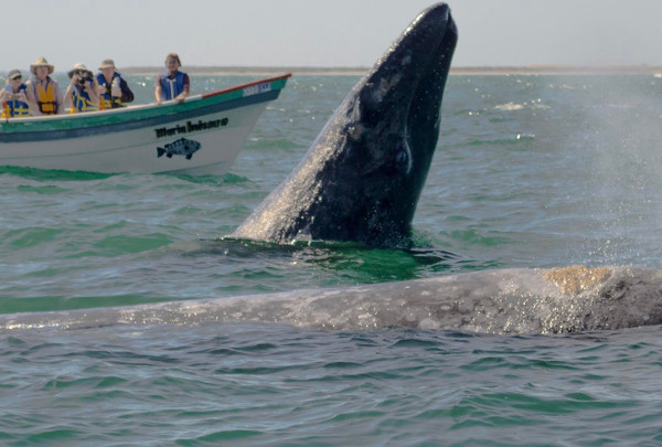 Mexico Whale Watching Trip