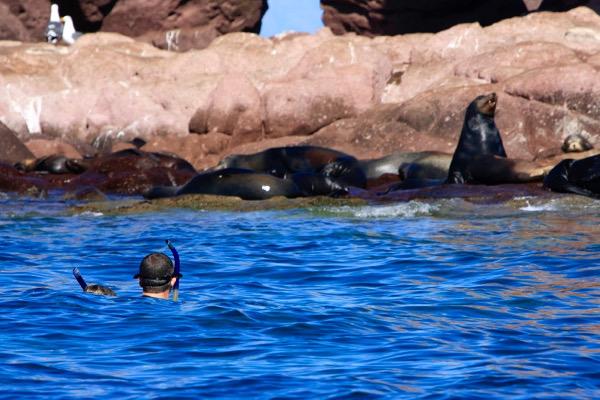 Baja Mexico Snorkeling