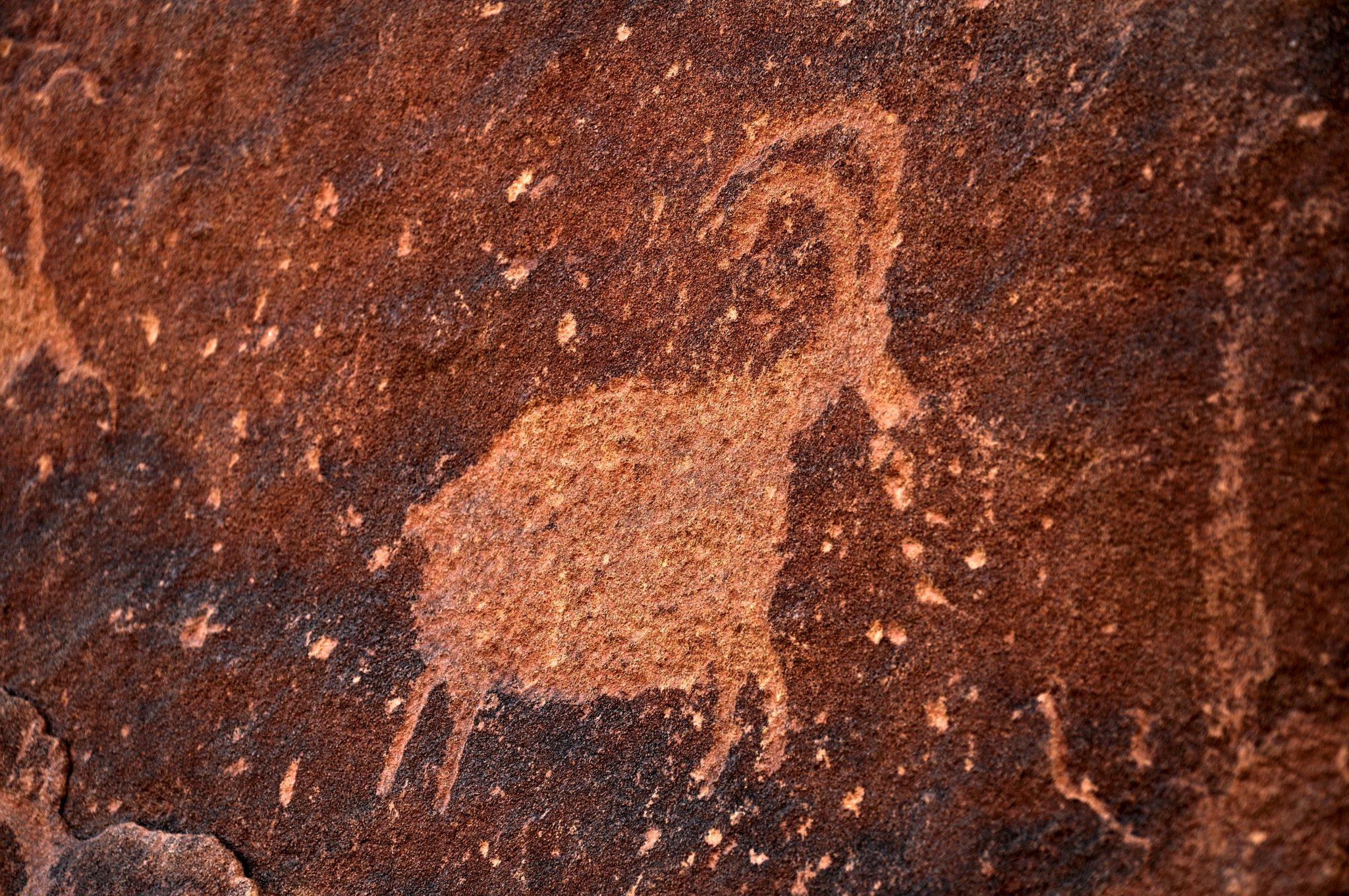 Bighorn Petroglyph - A Little Natural History: Bighorn Sheep