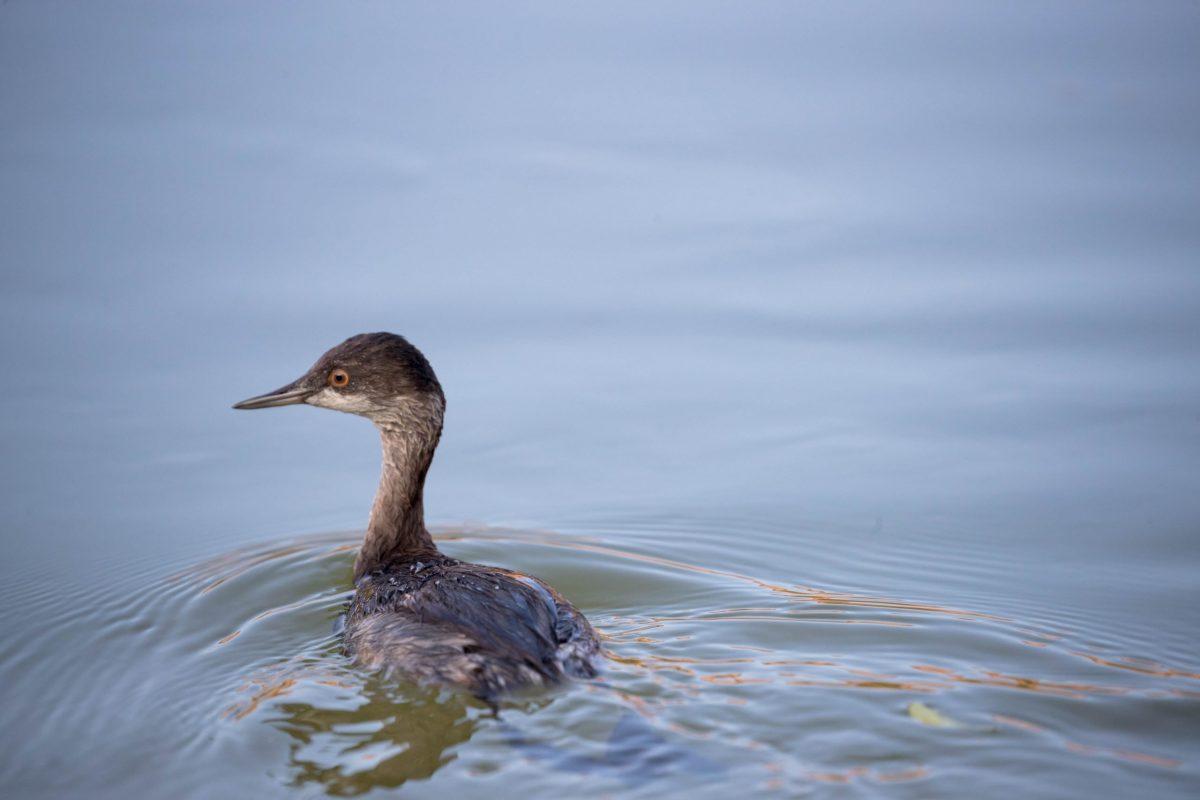 Bird-on-river